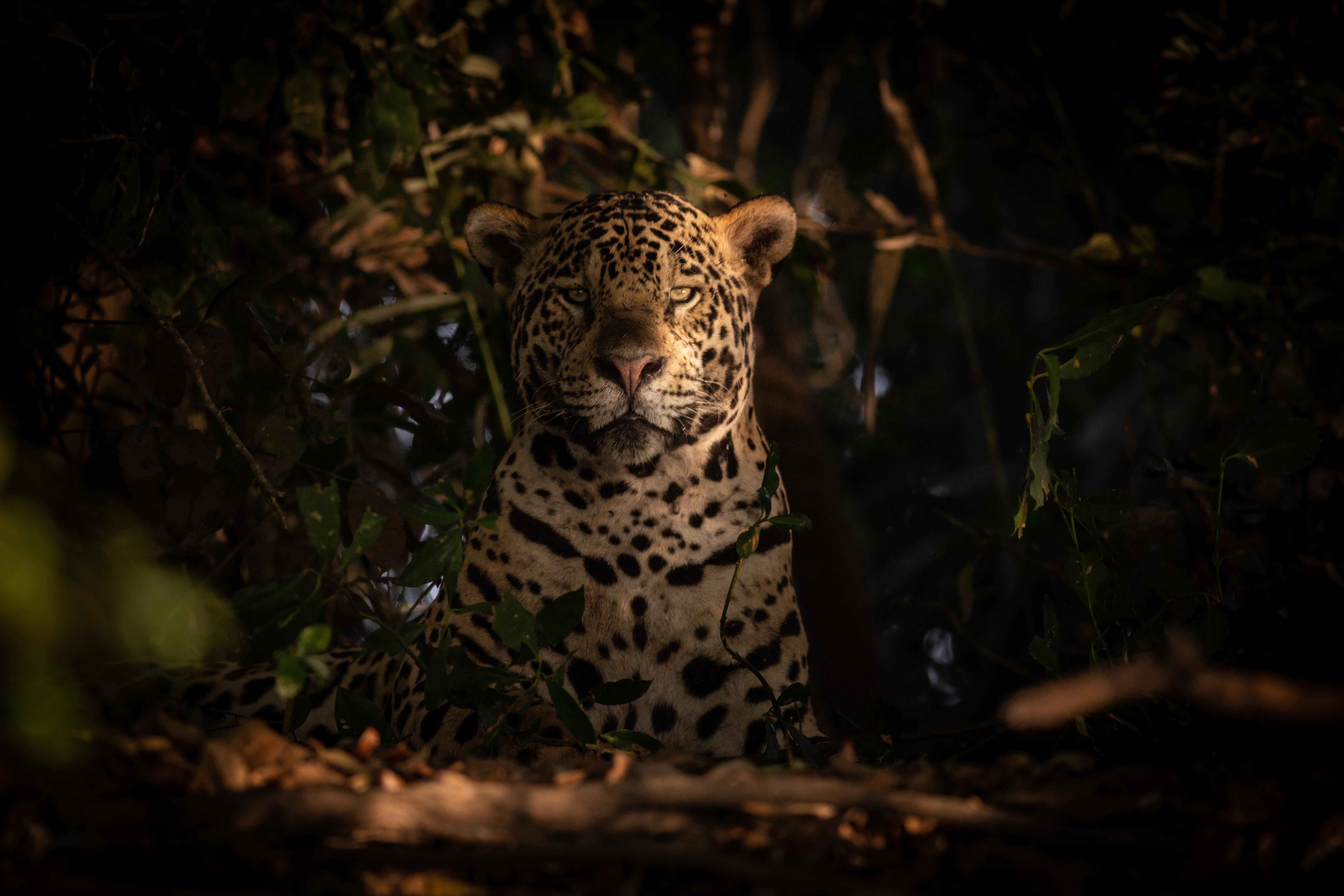 Exposição: Onça Pintada e Paisagens do Pantanal