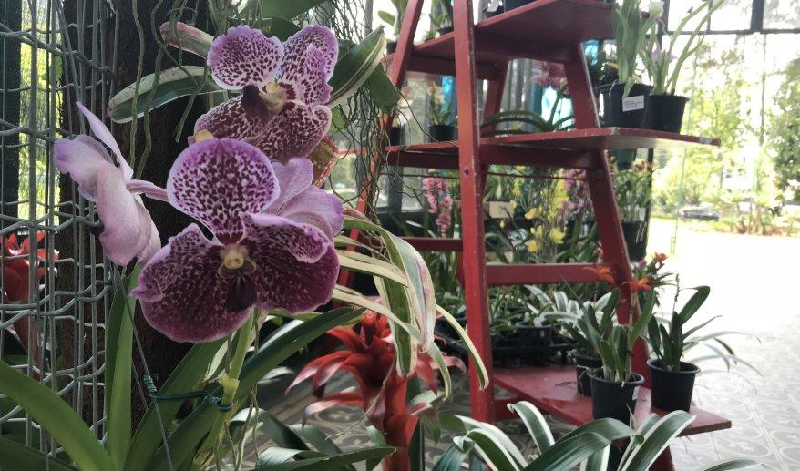 XVIII Exposição de Orquídeas e Bromélias